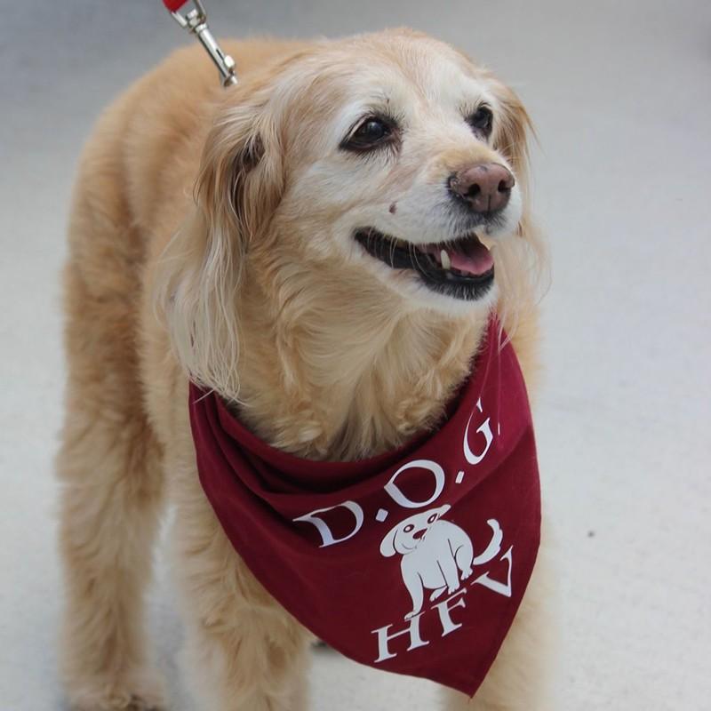 Custom Doggy Bandana